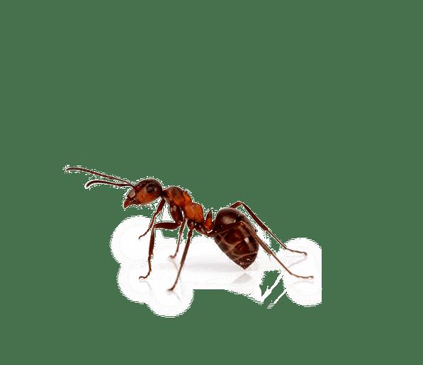 schädlingsbekämpfung lebensmittelbetrieb