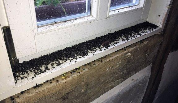Fliegen und Mückenbekämpfung