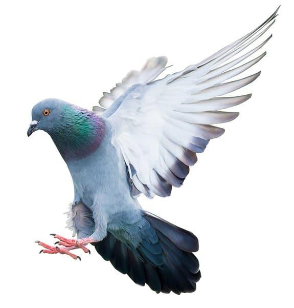 Tauben Vertreiben und Vogelabwehr